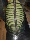 缝制丝杠防护罩